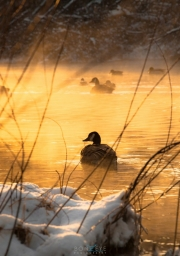 birthday_drive_and_geese_133