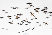 birthday_drive_and_geese_169
