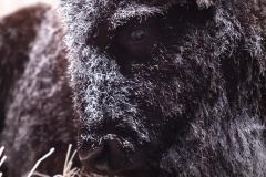 Frosty buffalo carwash 089