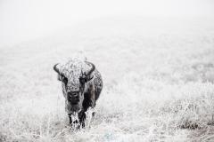 Frosty buffalo carwash 154