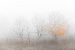 autumn fog with aaron 187