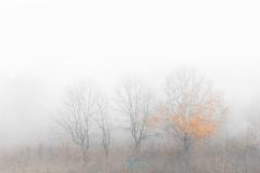 autumn_fog_with_aaron_188
