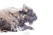 CSP_wth_snow_2861