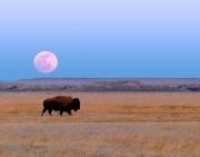 Moon_over_Buffalo_11x14