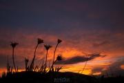 Colorado_470