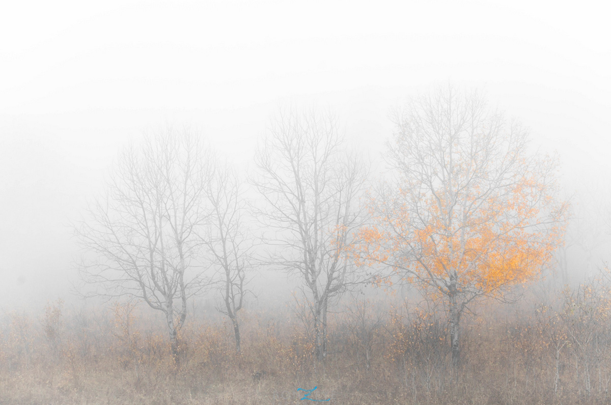 _0001_autumn_fog_with_aaron_187