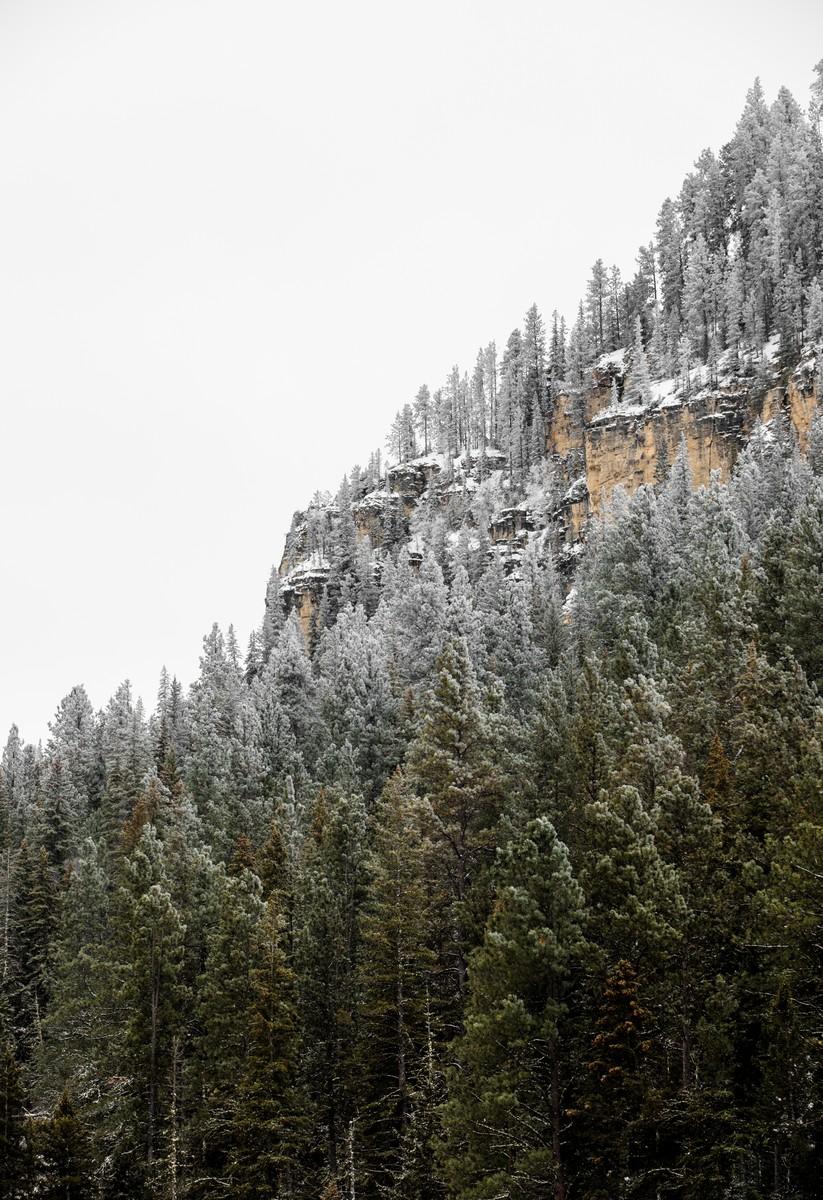 Terry Peak Fog Frost 084