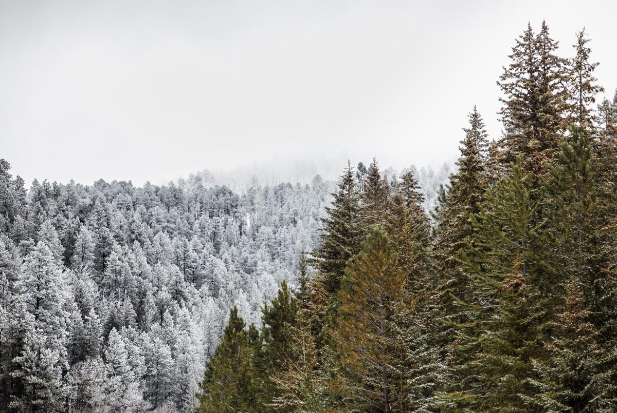 Terry Peak Fog Frost 093