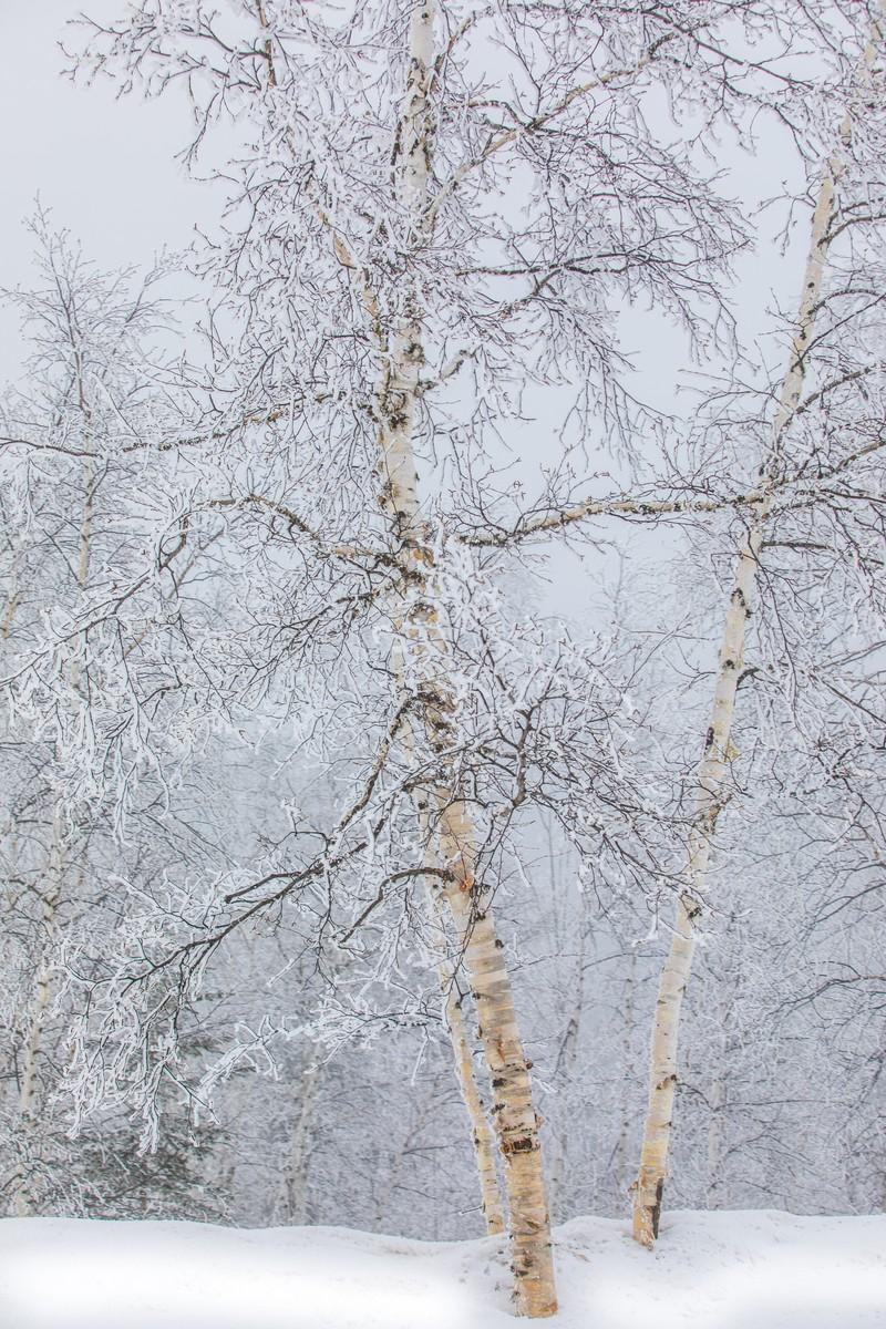 Terry Peak Fog Frost 111