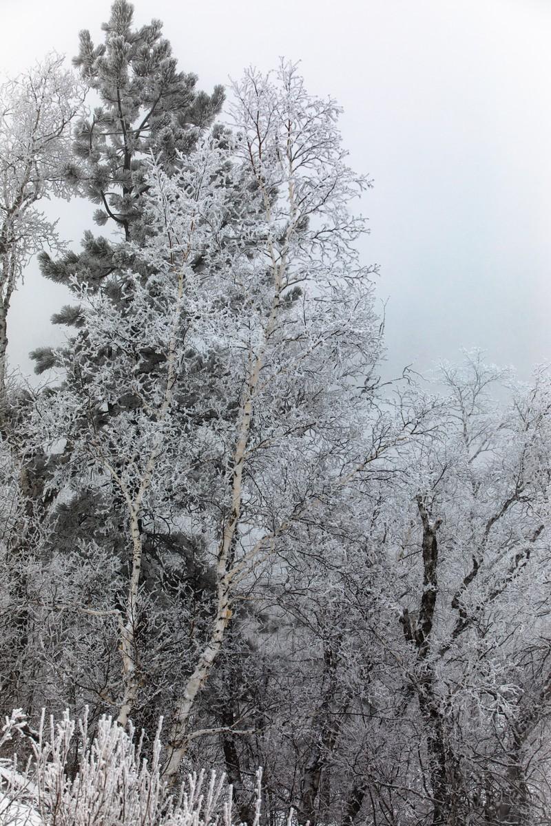 Terry Peak Fog Frost 130
