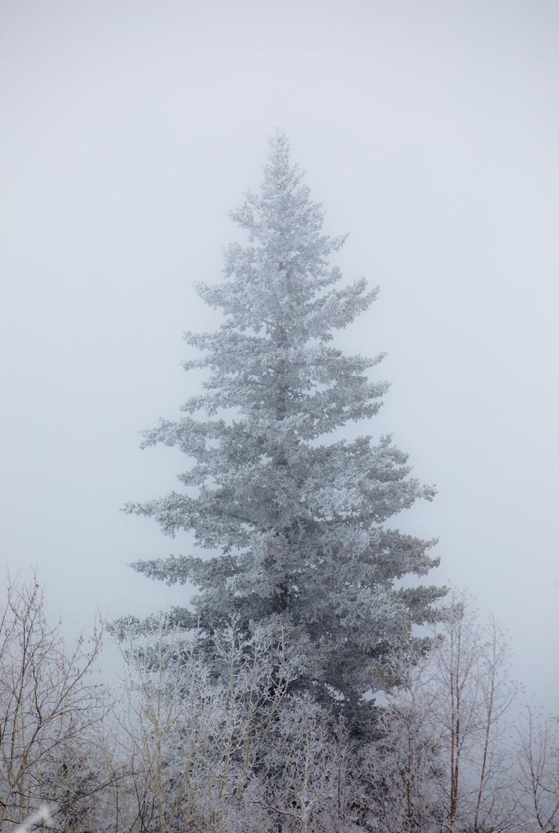 Terry Peak Fog Frost 150