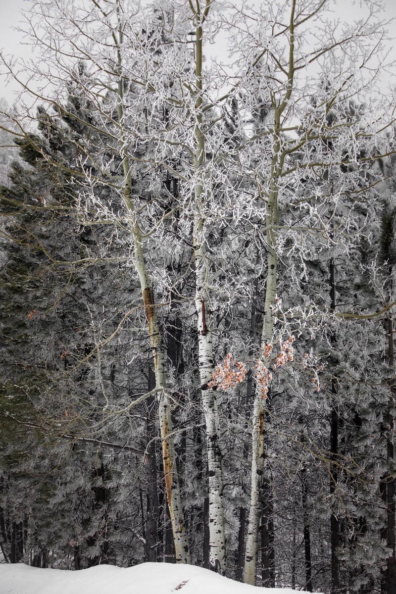 Terry Peak Fog Frost 154