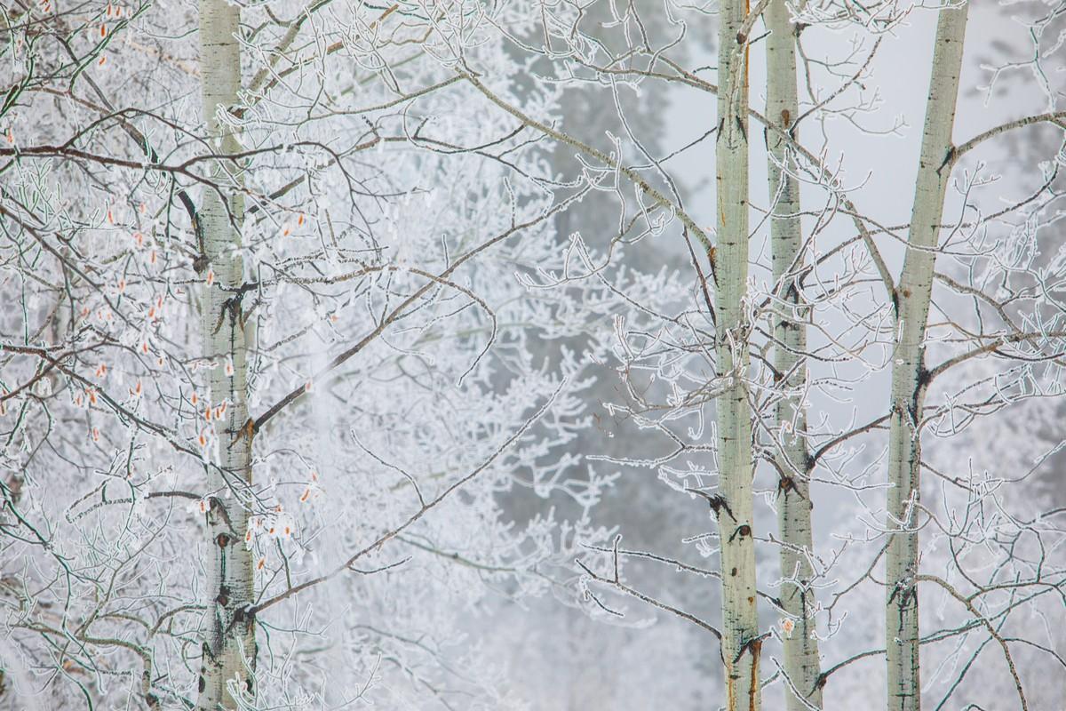 Terry Peak Fog Frost 178