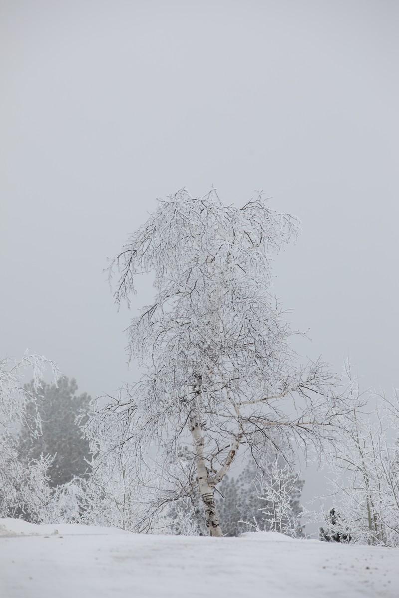 Terry Peak Fog Frost 214