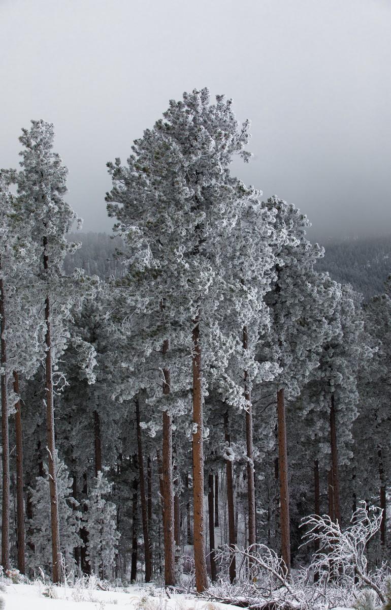 Terry Peak Fog Frost 224