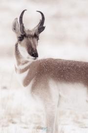 CSP_wth_snow_0881