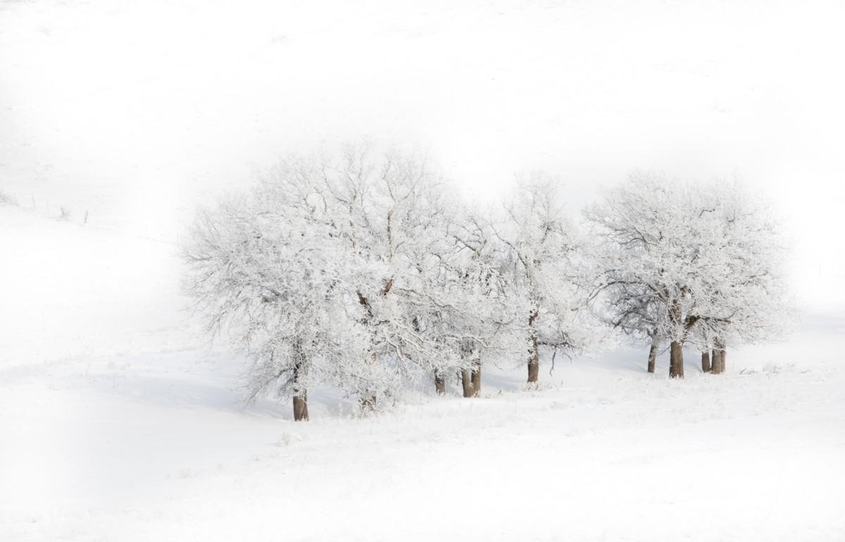 BFleming_winter (15)