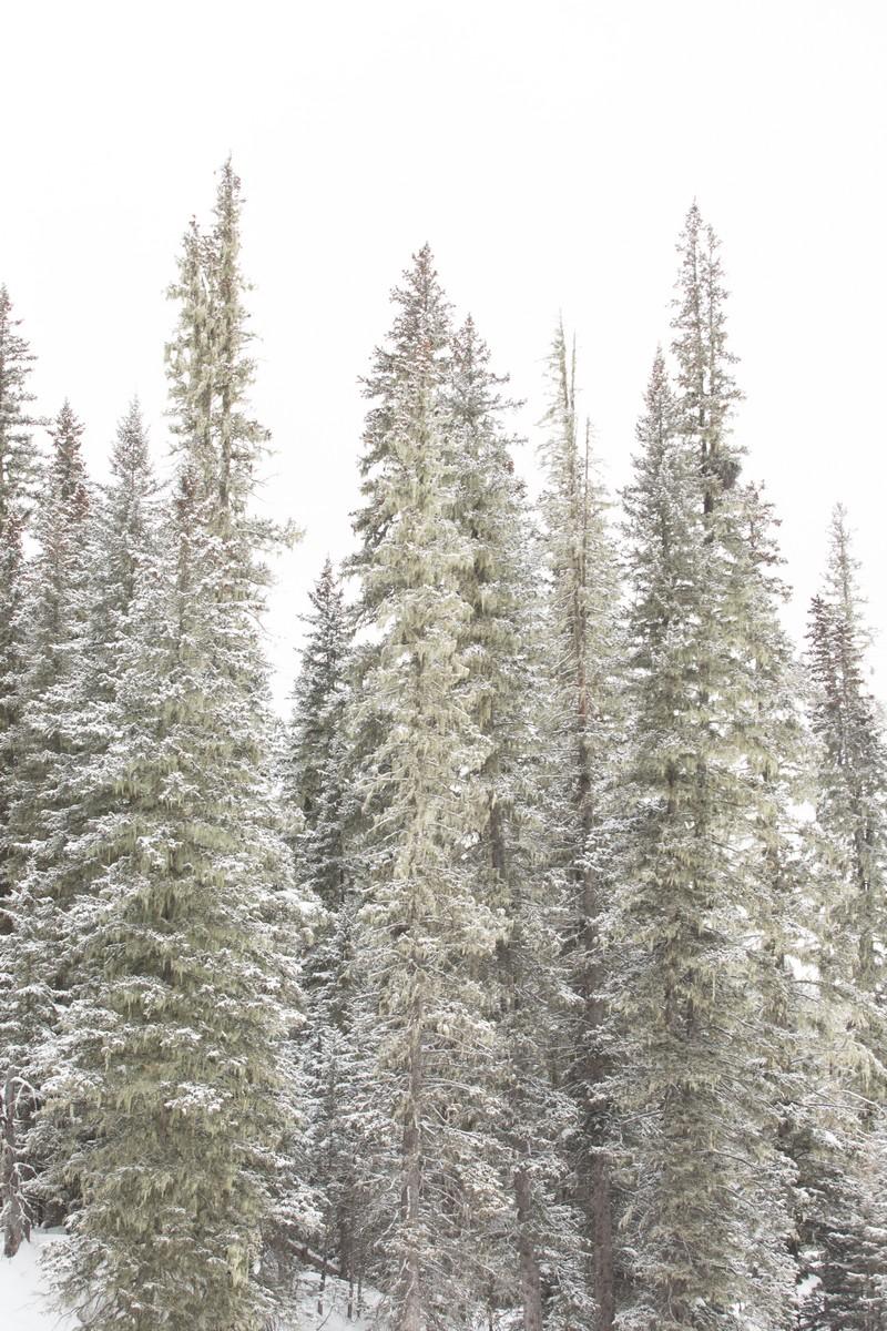 BFleming_winter (17)