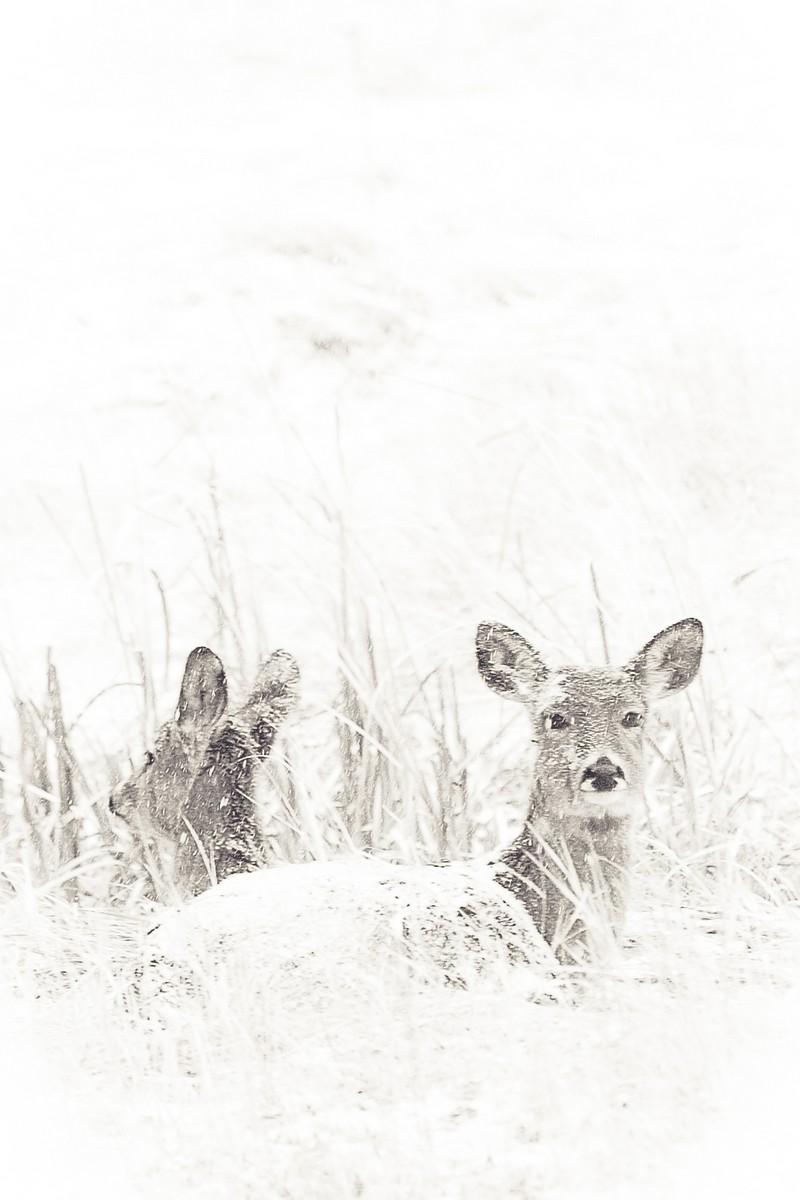 BFleming_winter (29)