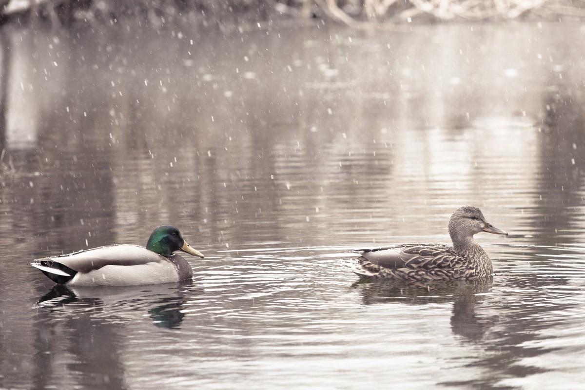 BFleming_winter (30)