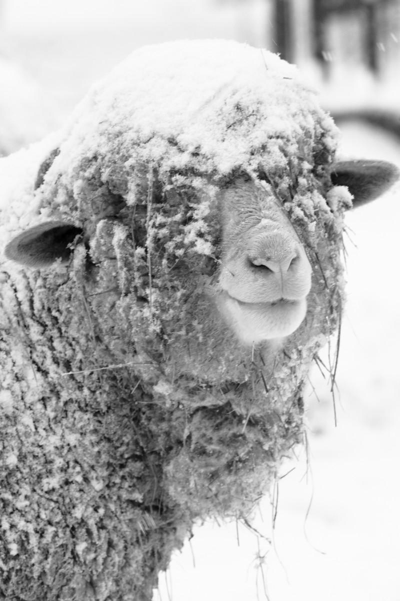 BFleming_winter (37)