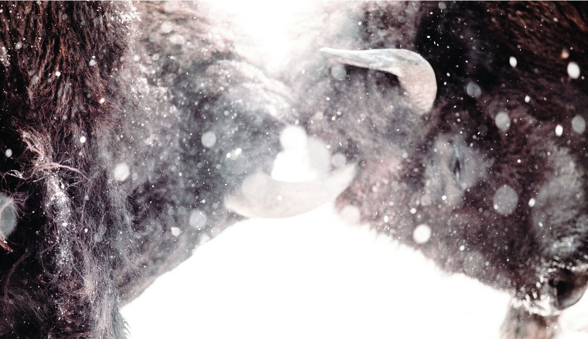 BFleming_winter (9)