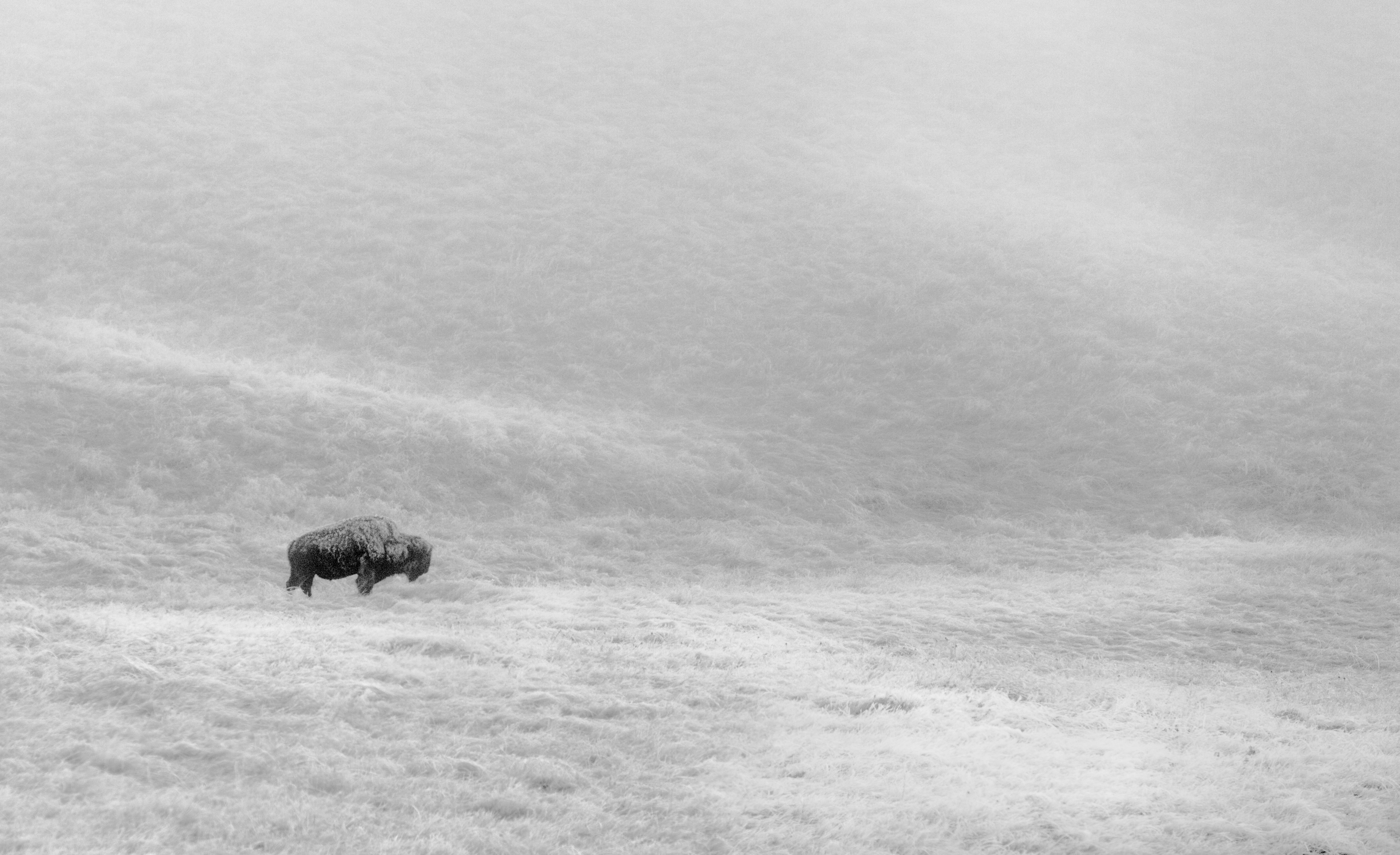 Frosty buffalo carwash 052